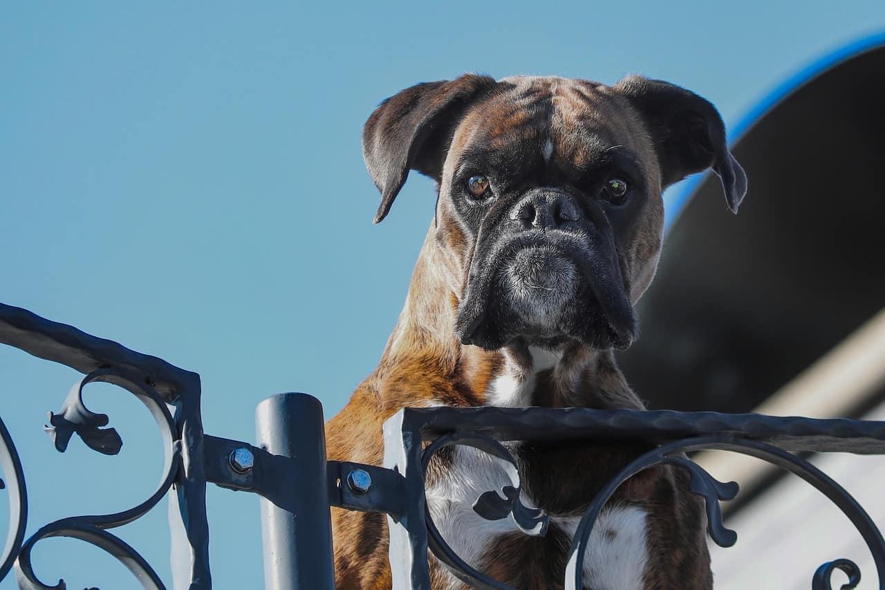 Elektronischer Hund Radar Sensor Alarmanlage Alarm Wachhund Diebstahlschutz Dog