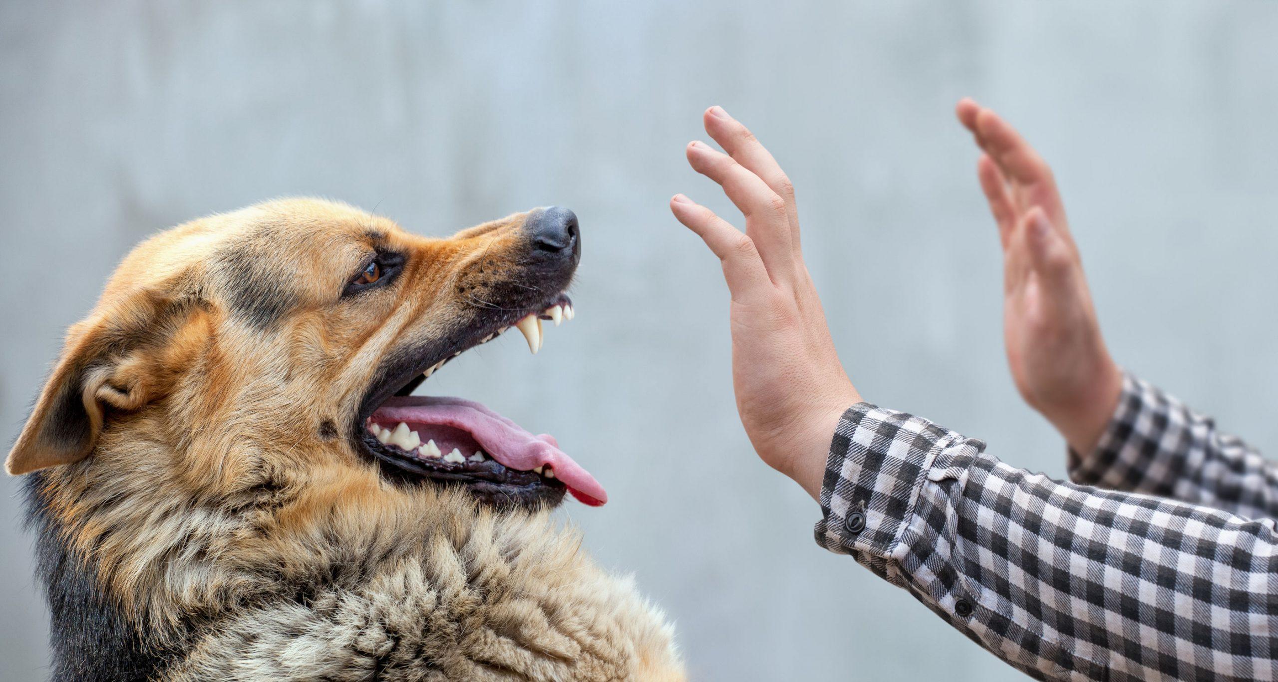 Hundeabwehr: Test und Empfehlungen (05/20)
