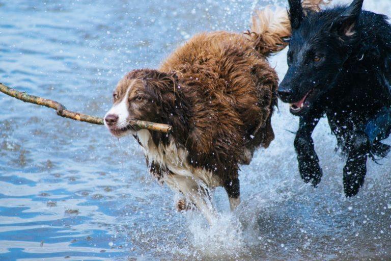 Hundeabwehr-1
